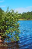 Green tree and blue lake Stock Photography