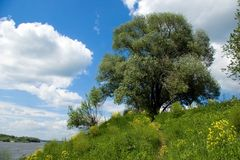 Green tree and blue skies over river Oka. In Russia Royalty Free Stock Image