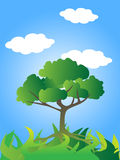 Green tree with blue sky Royalty Free Stock Photography