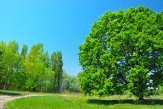 Green tree and blue sky Royalty Free Stock Photo