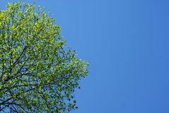 Green tree and blue sky. In background Royalty Free Stock Photo
