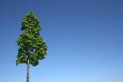 Green tree and blue sky royalty free stock photos