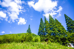 Green tree and blue sky Stock Photo
