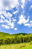 Green tree and blue sky Royalty Free Stock Photo