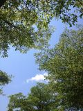 Green tree in blue sky Royalty Free Stock Photos