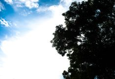 Green tree and blue sky in the afternoon royalty free stock photos