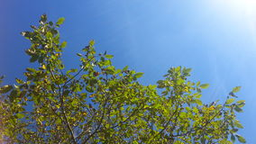 Green tree, blue sky Royalty Free Stock Photo