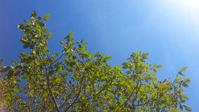 Green tree, blue sky. Blue sky, green tree, amazing view Royalty Free Stock Photo
