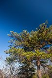 Green tree with a really blue sky. In the background Stock Images