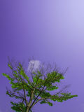 Green Tree. On blue sky background Stock Photography