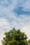 Green tree and blue sky. In background Stock Images