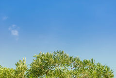 Green tree and blue sky. In background Royalty Free Stock Image