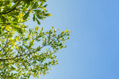 Green tree and blue sky. In background Stock Photography