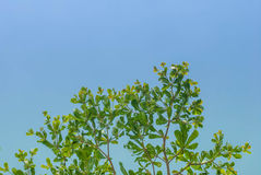 Green tree and blue sky Stock Images