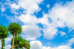 Green tree on blue sky. Background Royalty Free Stock Photos