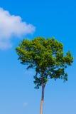 Green tree on blue sky. Background Stock Photo