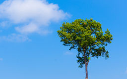 Green tree on blue sky. Background Stock Photography