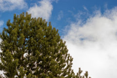 Green tree on blue sky background with clouds. The image green tree on blue sky background with clouds Royalty Free Stock Photos