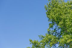 Green tree on a blue sky background. Summer day Royalty Free Stock Images