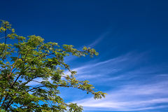 Green tree blue sky background. Green tree in sunny day with blue sky backgroundll royalty free stock photo