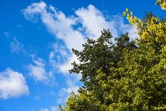 Green tree and blue sky. Big green tree on blue sky background Stock Photo