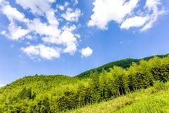 Green tree and blue sky Stock Photos