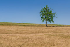 Green tree of blue sky. Close-up Stock Images