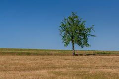 Green tree of blue sky. Close-up Royalty Free Stock Photography