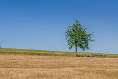 Green tree of blue sky. Close-up Royalty Free Stock Images
