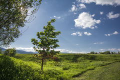 Green tree and blue sky. Country side landscape near Miercurea Ciuc, Harghita county, Romania Stock Photos