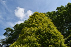 Green tree, blue sky. A sunny day in the garden Royalty Free Stock Image