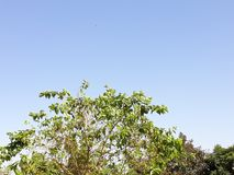 Green tree in a blue sky stock photo