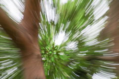 Green of tree blurred background, speed lens zoom effect Stock Photography