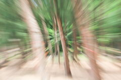 Green of tree blurred background, speed lens zoom effect Stock Image
