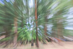 Green of tree blurred background, speed zoom effect Royalty Free Stock Photos
