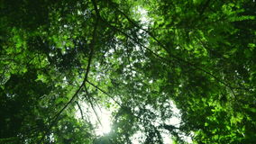 Green tree bottom view. Green trees with leaves and sunlight stock video footage