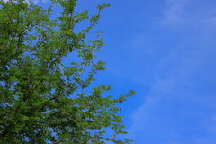 Green Tree Brances Frame Corner With Blue Sky Royalty Free Stock Photo