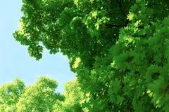 Green tree brances Royalty Free Stock Photos