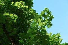 Green tree brances Stock Photography