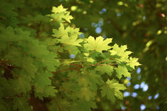 Green tree brances Royalty Free Stock Images