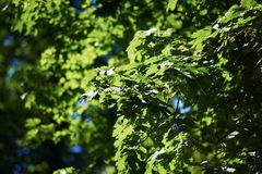 Green tree brances Stock Photos