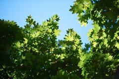 Green tree brances Royalty Free Stock Photo