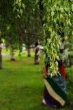Green tree branch Stock Image