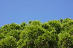 Green tree branches against the blue sky royalty free stock photos