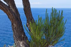 Green tree branches on the coastline against blue water of Atlantic ocean. Madeira island, Portugal stock image