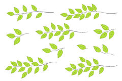 Green tree branches set Royalty Free Stock Photo