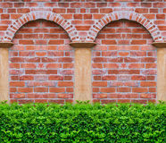 Green Tree with brick wall background in park Stock Image