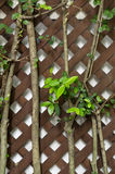 Green tree with brown wood cross. In the garden Royalty Free Stock Photo