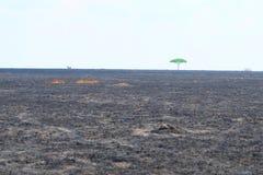 Green tree in a burned field Stock Photo