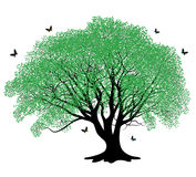 Green tree with butterflies Stock Photography
